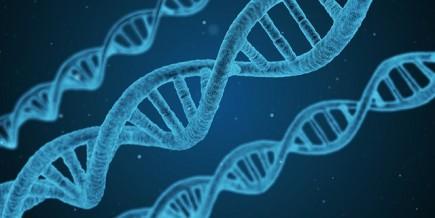 Genes (IMG)