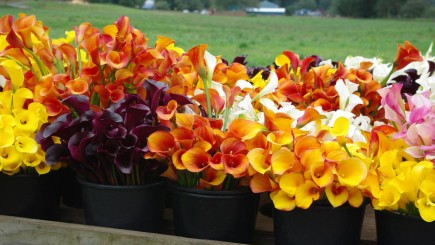 Specialty Cut Flowers (IMAGE)